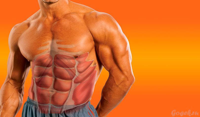 Как увеличить талию мужчине - упражнения